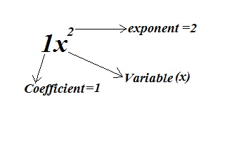 Explain polynomials with example.